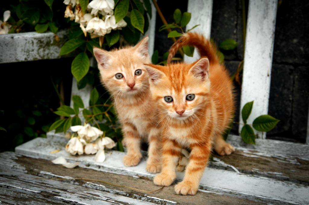 Ja, det er nuttede, men de kan være dødsensfarlige ;) (Foto: Polfoto)