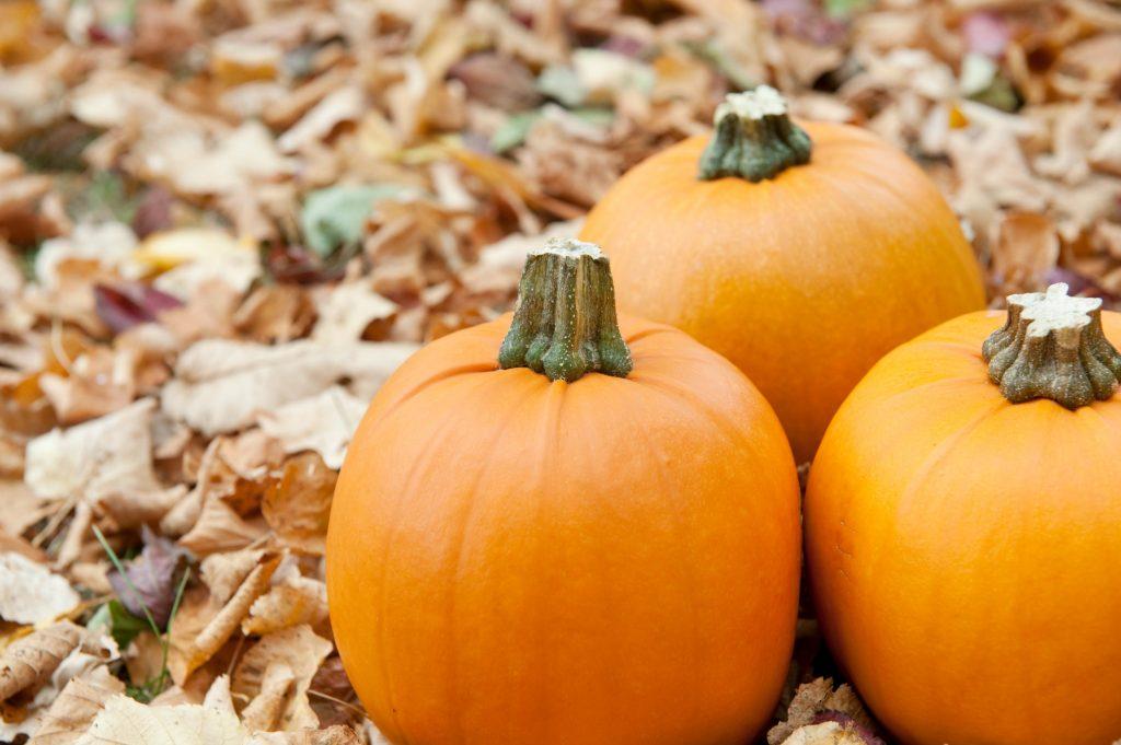 Pumpkin spice: Efterårskrydderiet du skal kende nu
