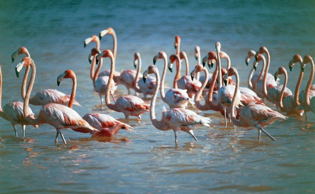 mexico-rejseinstagram-flamingoer, drømmerejse