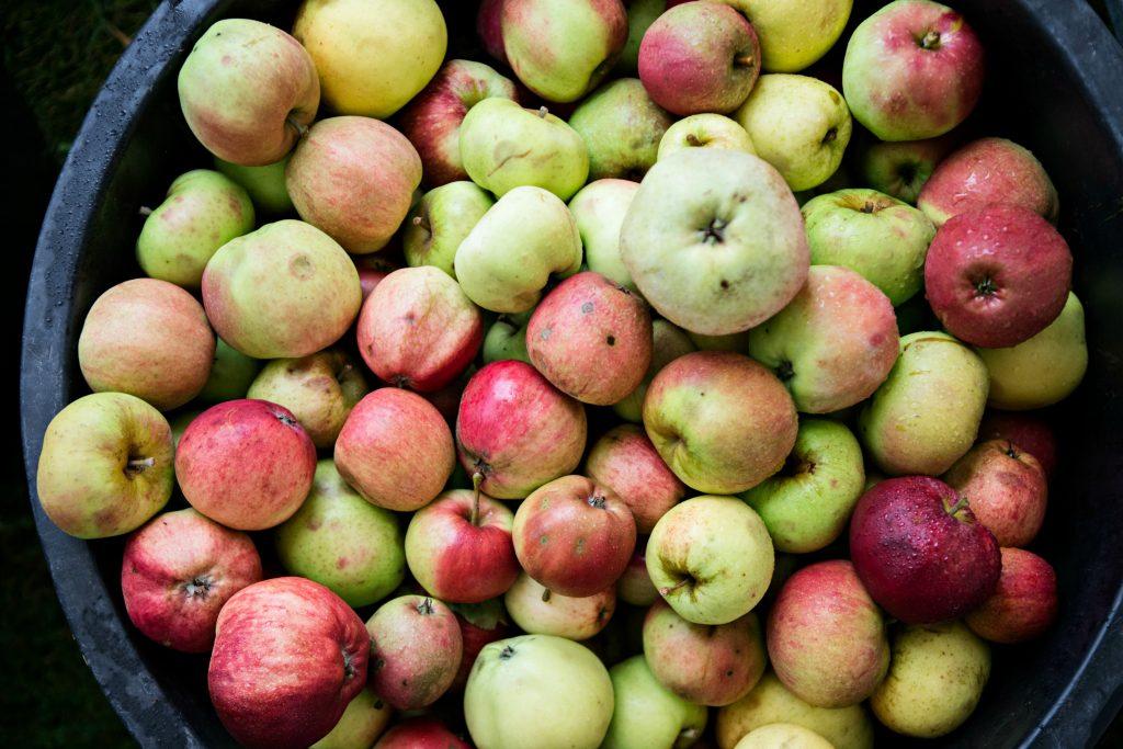 Dårligt sommervejr er godt æblevejr