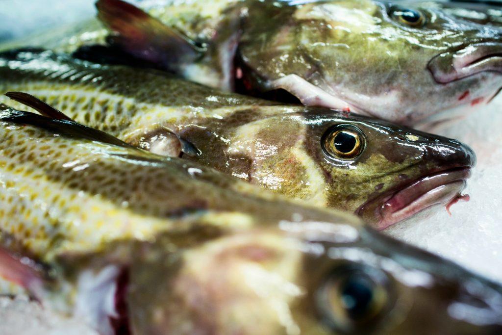 Tidsbegrænsning på fiskeri bliver fjernet
