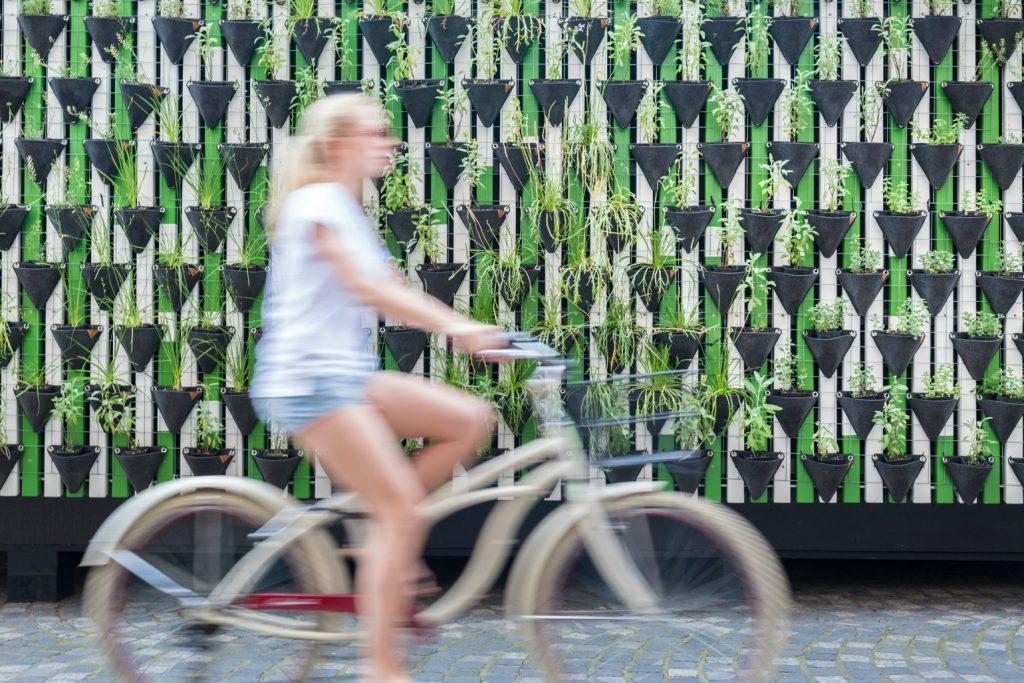 cykel cyklist bæredygtig, bæredygtighed, bæredygtigt