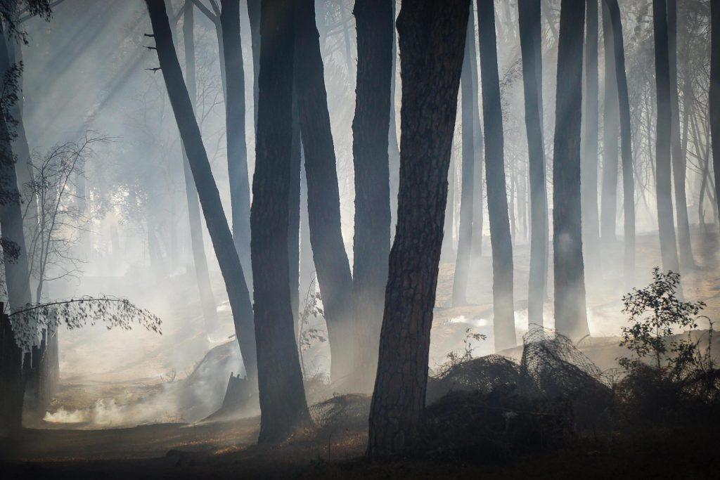 sicilien, brand, skovbrand, mafia, mafiaen, italien, myndigheder, brand, tørke, varme, hedebølge, regn, natur, påsat, ildspåsættelse, klima, miljø