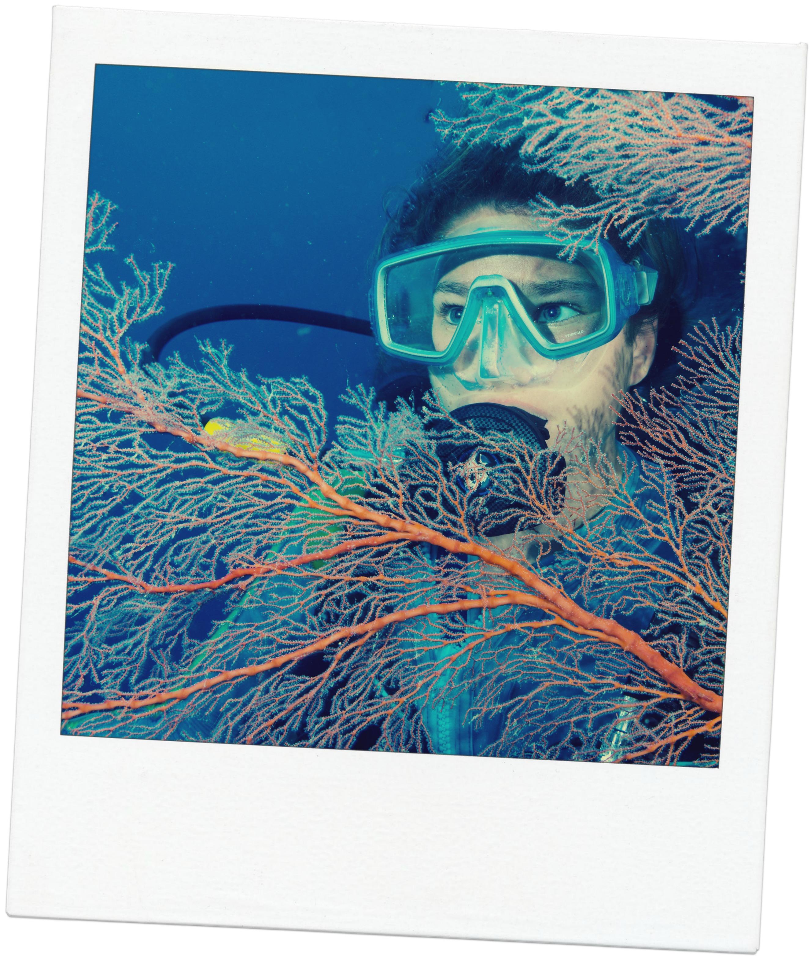 great barrier reef, kvinde, ung kvinde, dykker, anemoner, alger, koraler