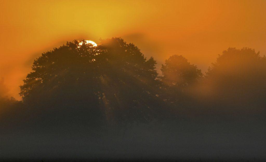 tyskland, solopgang, dagens billede, sol,