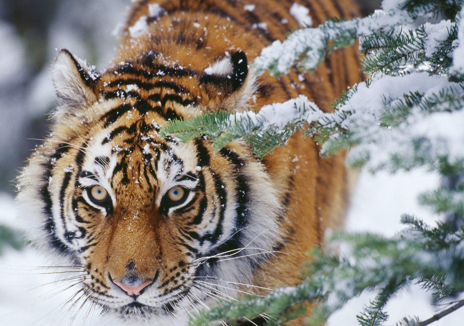 jul, juleshopping, juleræs, rejser, sydpå, rejse, vilddyr, ferie, kaos, julen