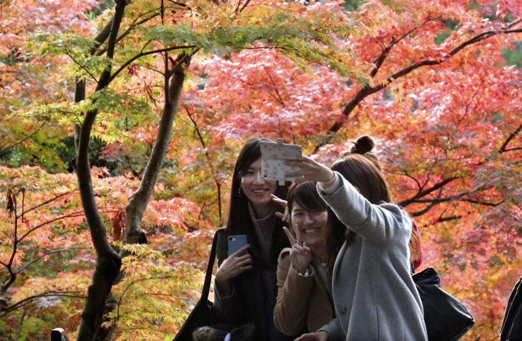 dagens billede, japan, foto, selfie, træ