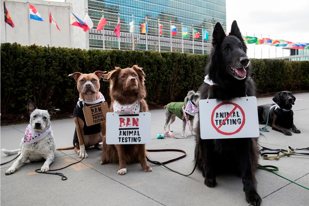 the body shop, forever against animal testing, dyreforsøg, protest, underskriftsindsamling, dyr, dyrevelfærd