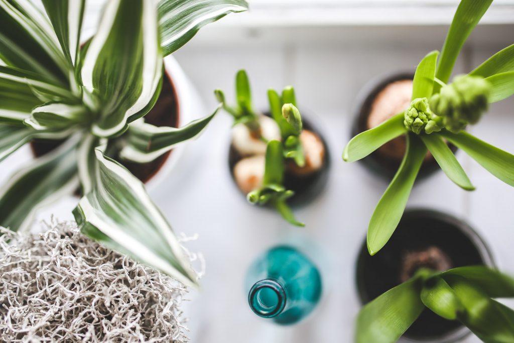 planter. Sikke en flot og levende vindueskarm! Den kan blive din! (Foto: Pexels)