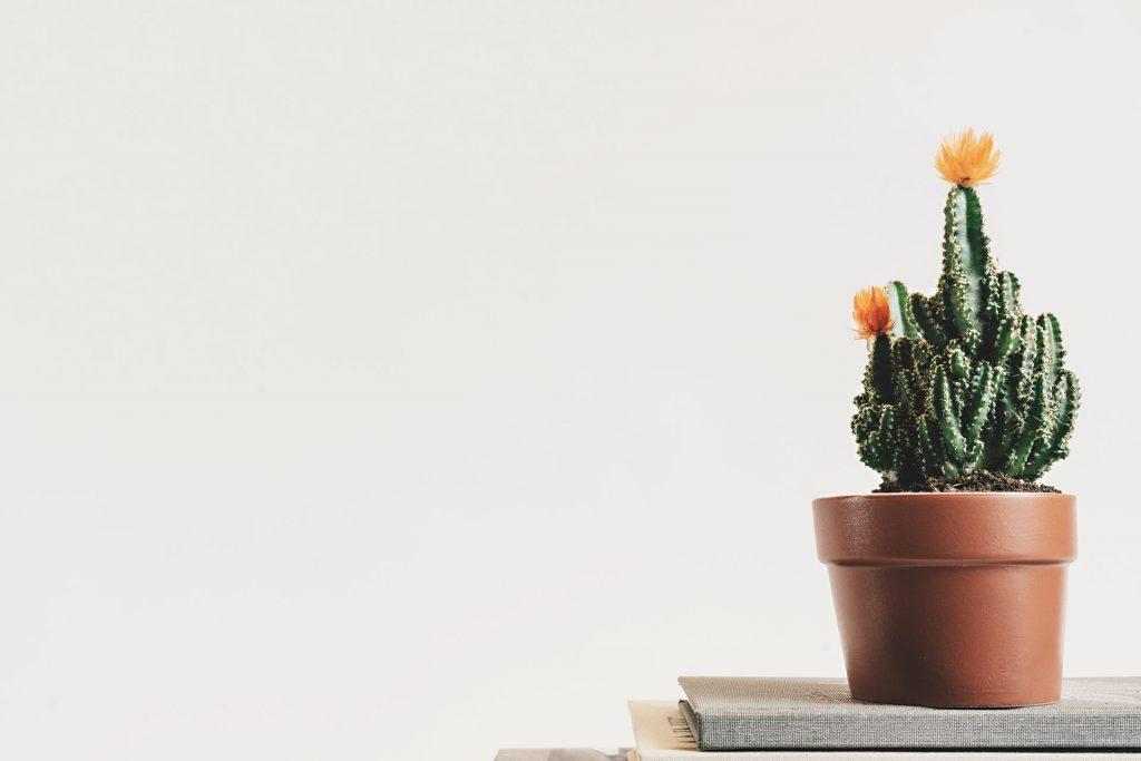 Kaktus fås i mange varianter og former. (Foto: Pexels) vand