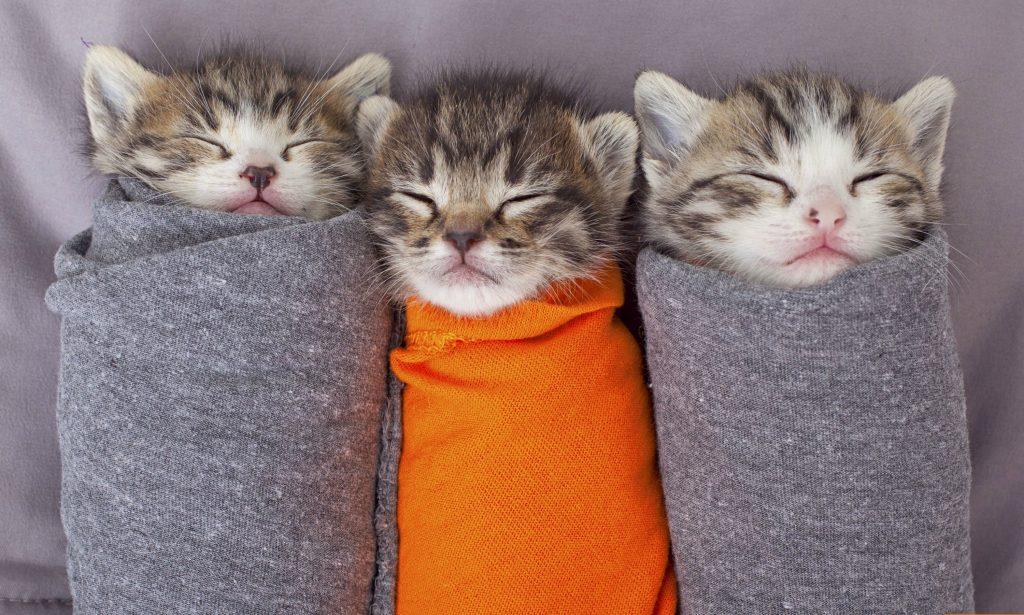 Killinger kattens uge
