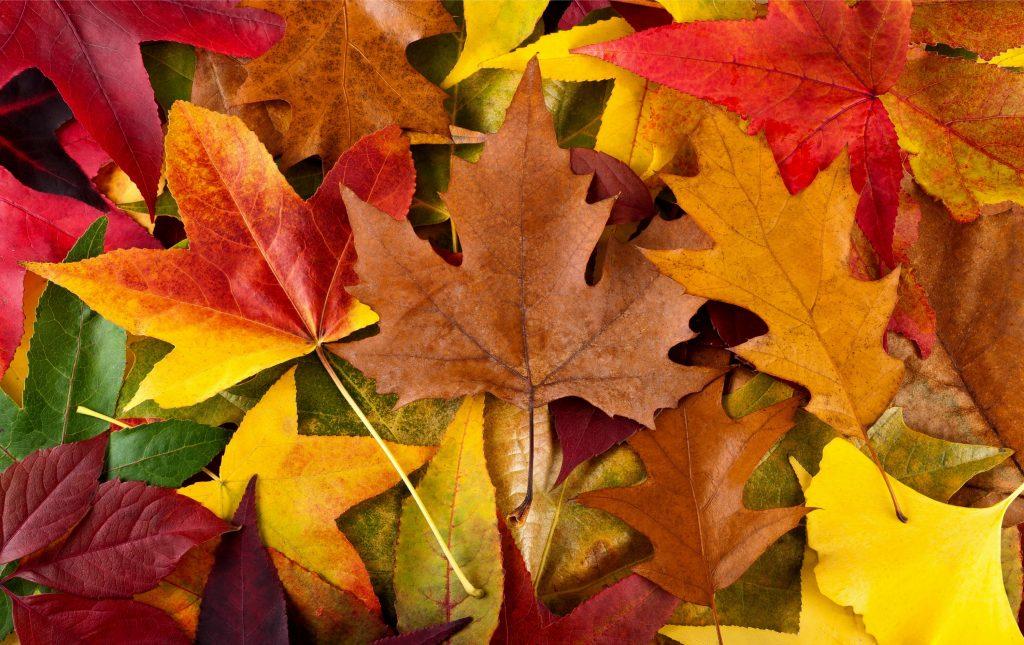 Grunde til at elske efteråret flotte farver