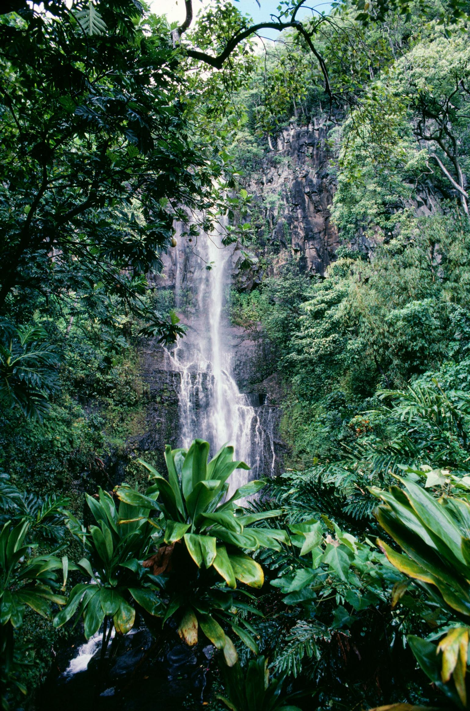 rejsekløe rejseprofiler instagram rejseinsta rejseinstagram hawaii regnskov maui wailua vandfald