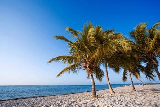 Anne rejste til Key West i julen. Her ses den smukke strand med palmer (Foto: All Over)