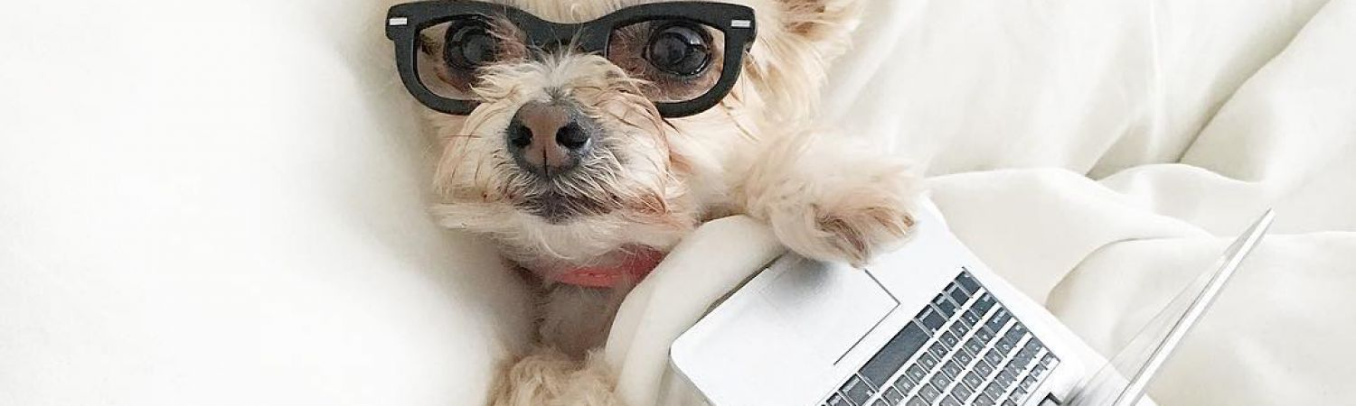 puppy with laptop. CV