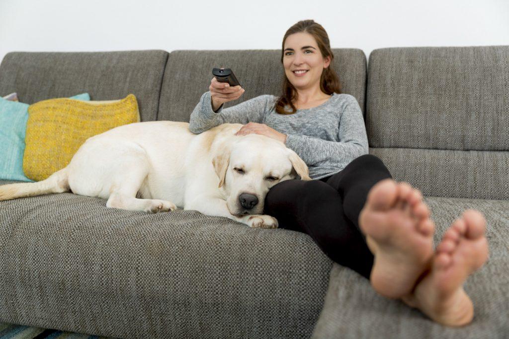 Argumenter for at undgå træning, sofa, kvinde, hund, labrador, golden retriever, stue, fjernsyn, tv