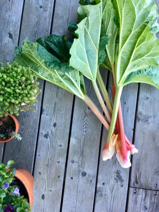 Rabarber, sommer, høst, forår, planter, grønt