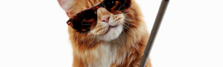 selfie, cat, selfiestick selfie stick, sociame medier, some, solbriller, kat, depression, mental sundhed, selvværd