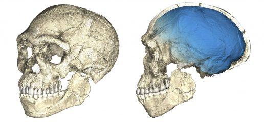 kranie, fossiler, menneskeheden, homo sapiens, forskning, datering, evolution, marokko, marrakesh, mennesker, forskning, historie