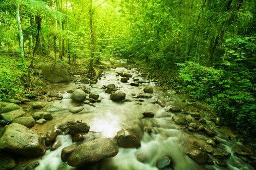 bbc, real happiness project, glæde, naturen, planet, jorden, jungle, bjerge, ørken, øer, hav, natur, miljø, klima, jorden, planter, dyr, youtube, naturfilm, gratis