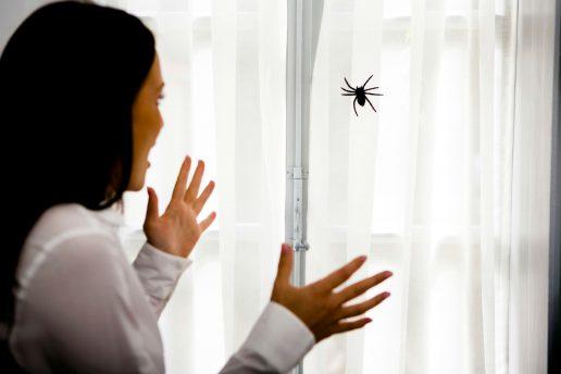 edderkopper, araknofobi, medfødt, genetisk, frygt, angt, panik, babyer, pupiller, flygt, kæmp, billeder, forskning, videnskab, test, dyr, frygt,