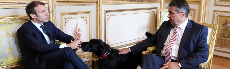 nemo, præsident, emmanuel macron, elyseepalæet, brigitte macron, tradition, frankrig, politik, tis, gadekryds, officielle begivenheder, billeder, hund, kæledyr