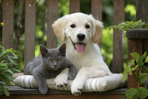 menneskets bedste ven, hund, kat, hundeejer, katteejer, kæledyr, forskning, venskab, barn, kammerat, lege, gåture, aktivitet