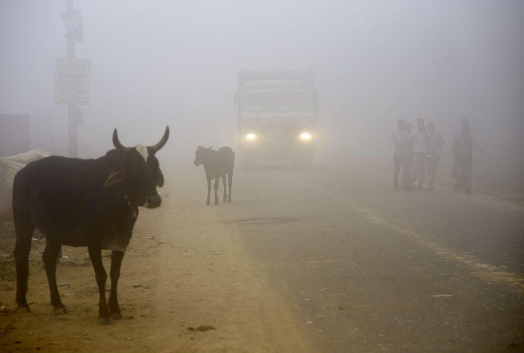 new delhi, indien, smog, forurening, røg, afbrænding, udstødning, gas, kold luft, blive inde, sundhedsskadeligt,