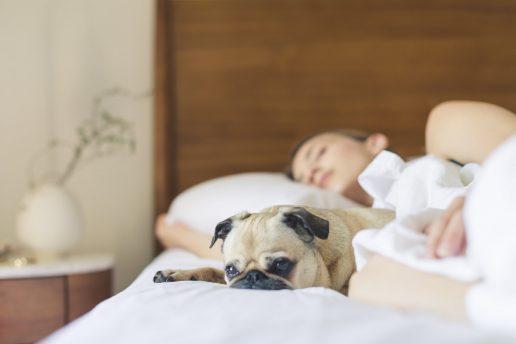 En hund i sengen påvirker ikke din søvn så meget, som først antaget. (Foto: Pexels)