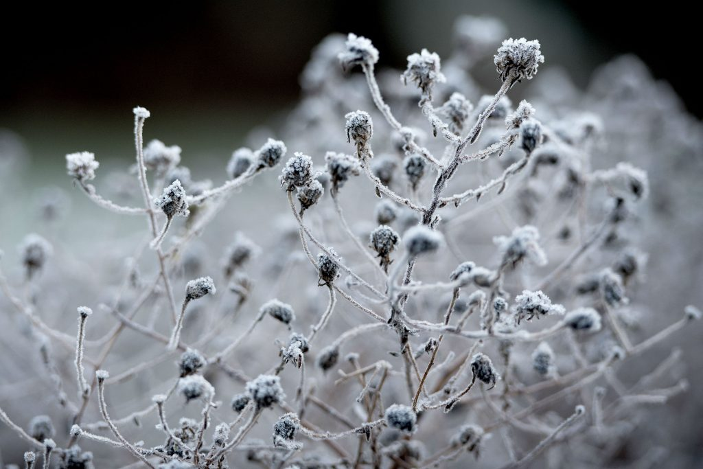frost, kulde, sne, is, danmark, vejret, vinter, koldeste nat, koldeste morgen, kulde, minusgrader, frys