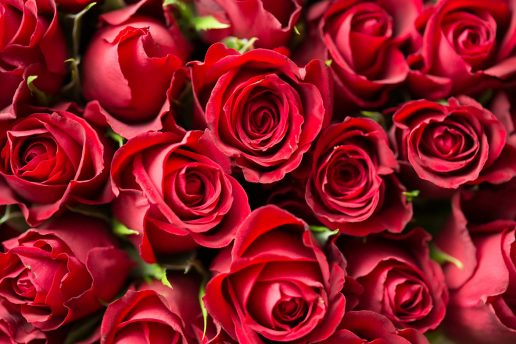 Røde roser, roser, kærlighed, love, romantik, blomster, rød, røde, rødt, buket, mors dag, kæreste, mand