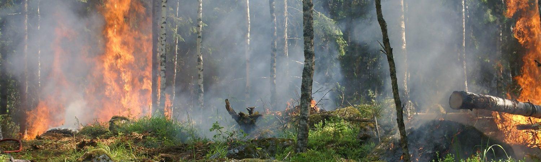 Skovbrand, brand, ild, røg, ildebrand