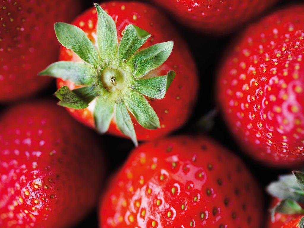 jordbær danske dansk gartneri