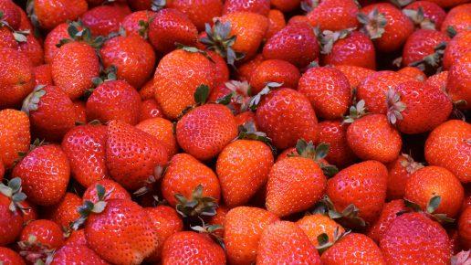 jordbær danske frugt frugtavler