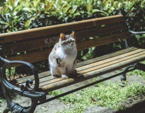 Kat, katte, dyr, kæledyr, sød, nuttet