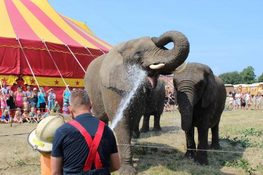 I dag har elefanterne i Cirkus Arena deres sidste show