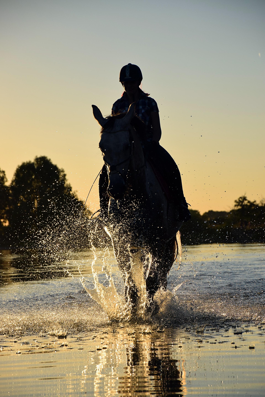 Hest ridning rytter sport