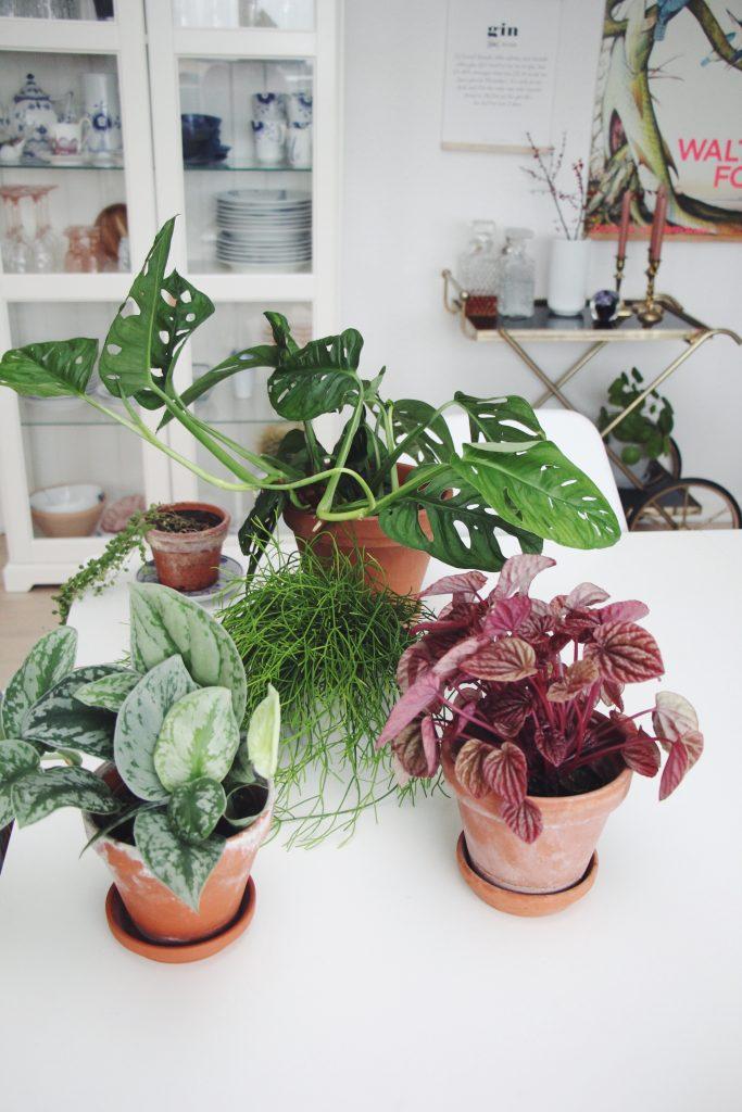 Forår, Bolig, planter