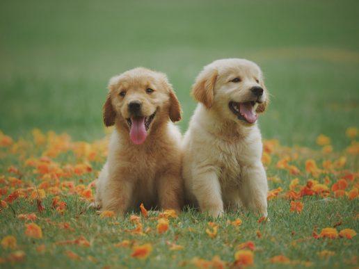 Dyr, hund, hunde, hvalp, hundehvalp, sød, nuttet, cute, dyrenes beskyttelse