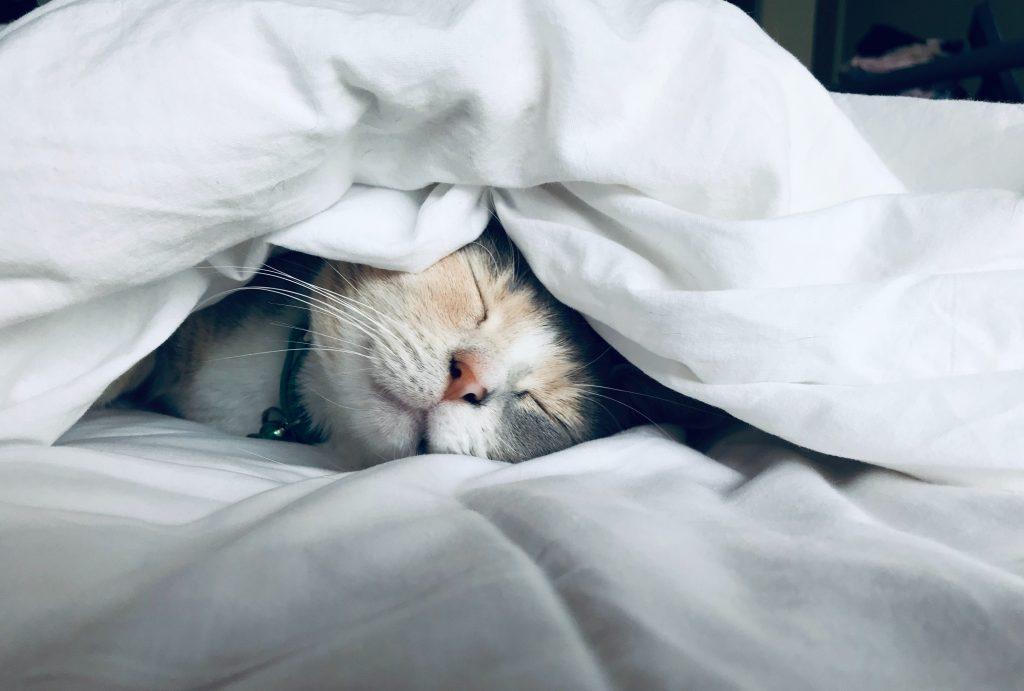 kat, sød, nuttet, sove, søvn, søvnig, træt, dyne, seng, fræk kat, cute, nuser