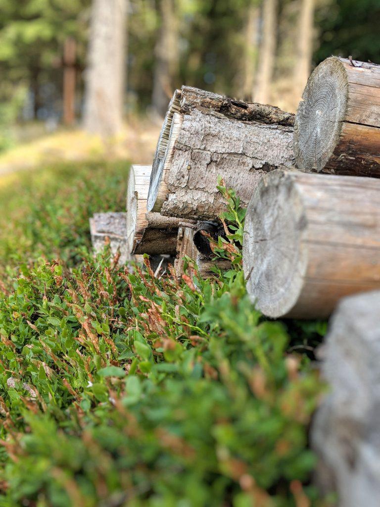 skov hygge træ græs weekend (Foto: unsplash - Lars Eberhardt)