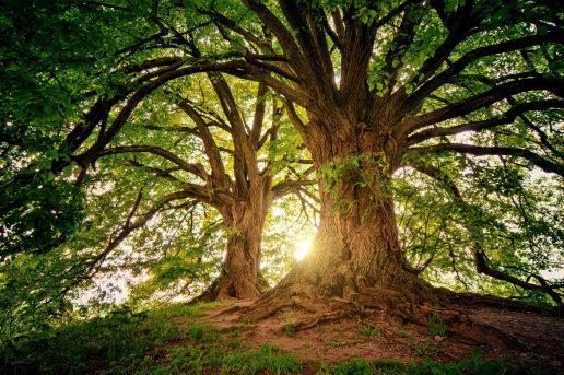 Sko, træer, frisk luft, gå tur, tur, landet, naturen, sommer, sol, natur, grønt