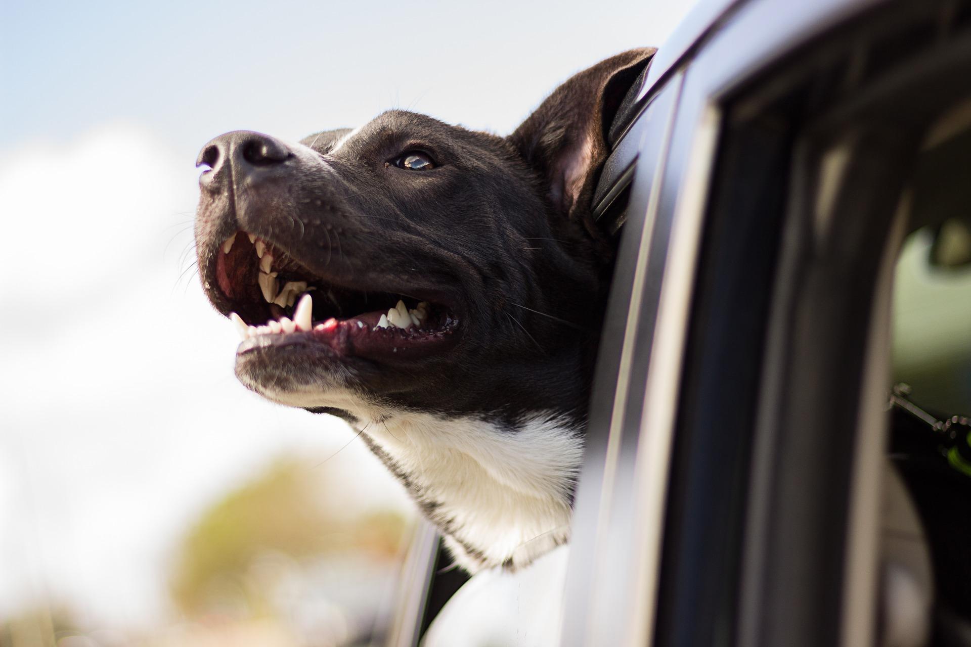 kør selv-ferie med hunden (Foto: Pixabay)