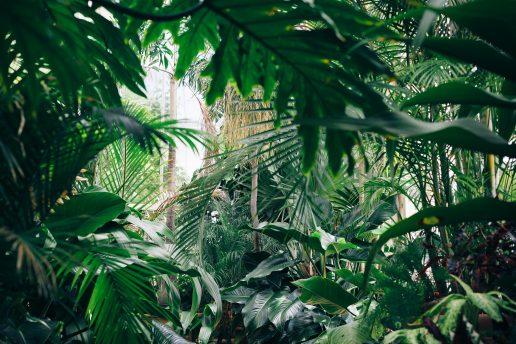 Det er sundt for dit helbred at have flere grønne planter i hjemmet. (Foto: Unsplash)