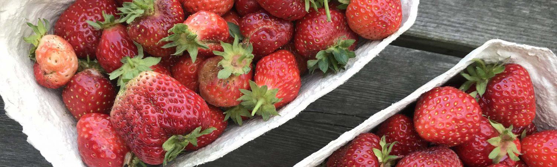 jordbær, danske, sommer, bær, frugt, snacks, danmark