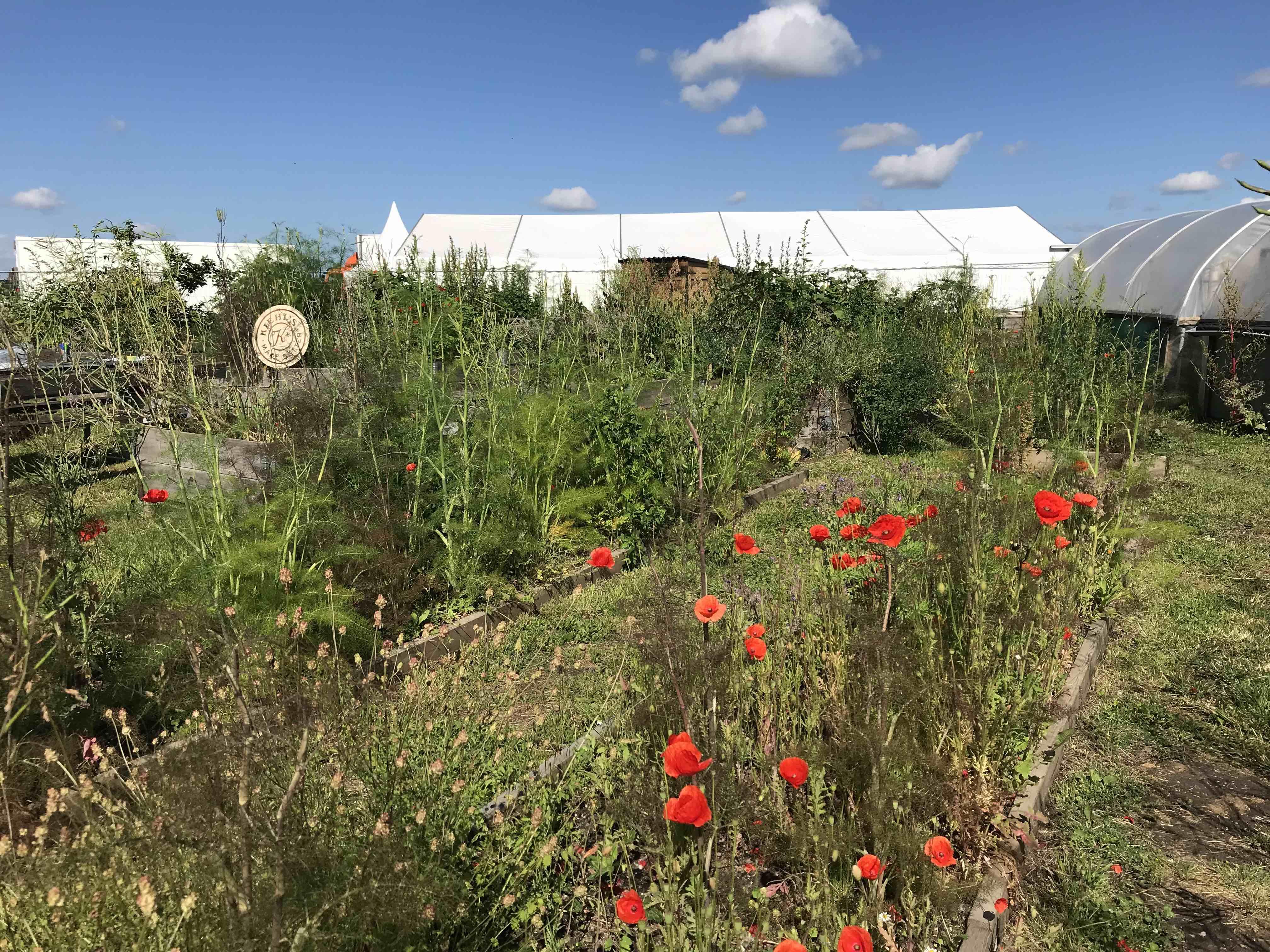 have, urban gardening, blomster, urter, planter