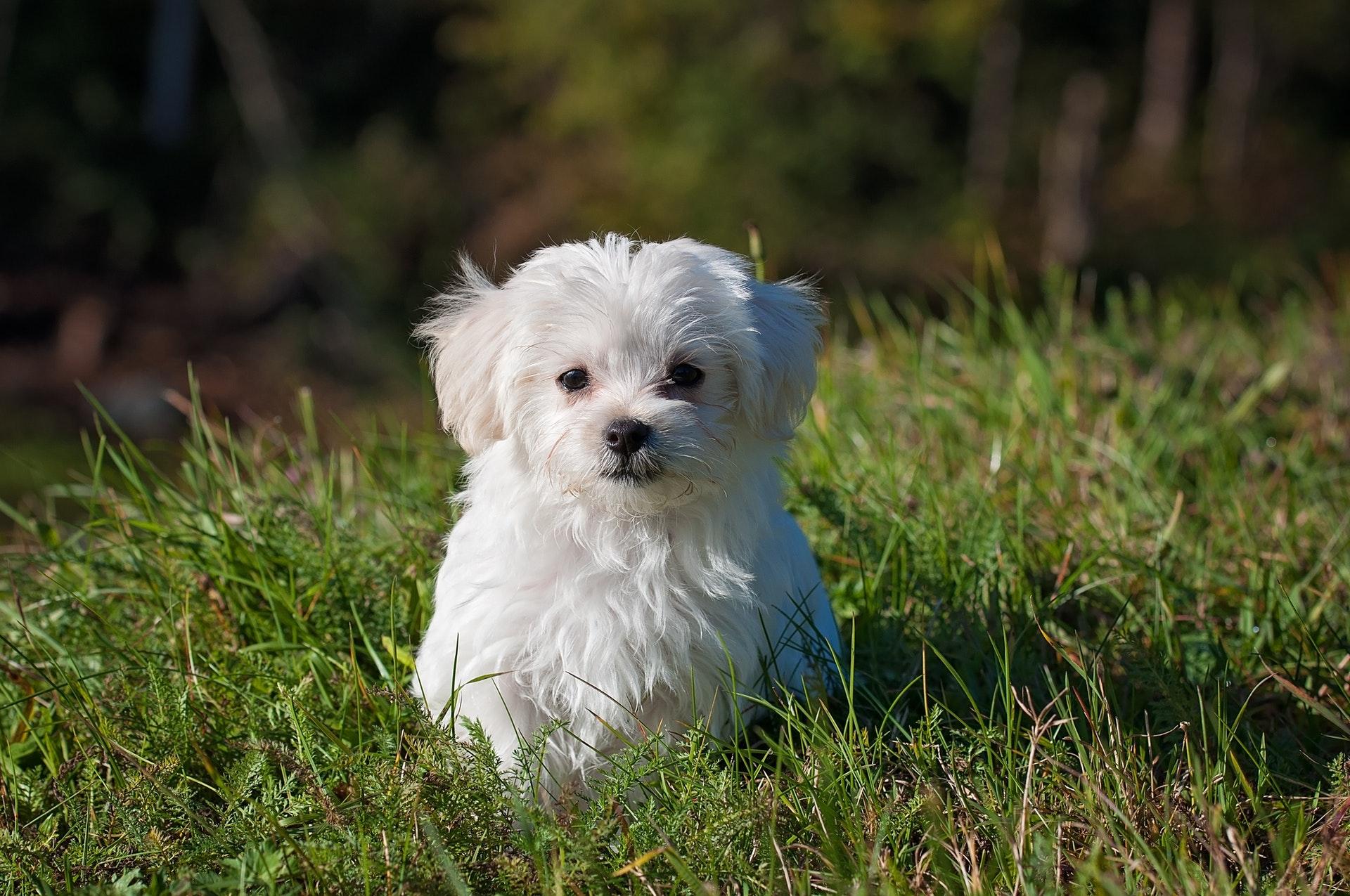 hund, dyr, sød, cute, nuttet, hundehvalp, sikker, sikkerhed