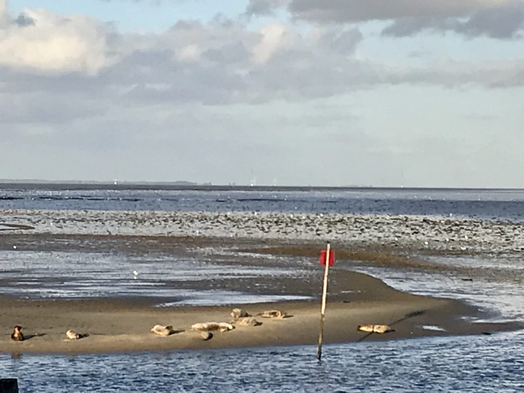 havet vesterhavet vadehavet sky himmel strand fanø danmark sæler (Foto: MY DAILY SPACE)