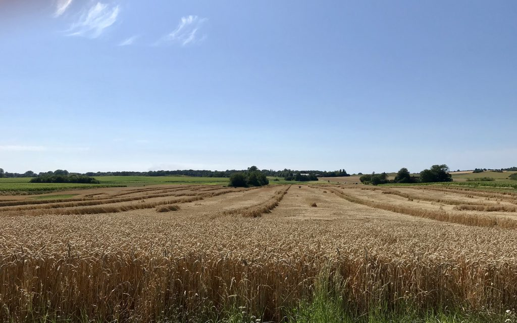 mark korn danmark himmel landskab (Foto: MY DAILY SPACE)