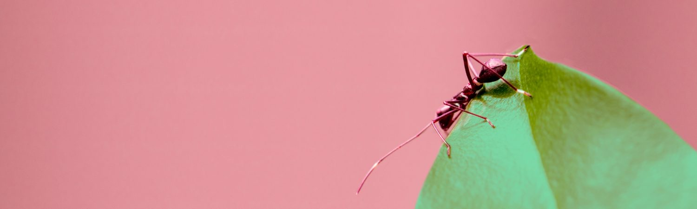 myre blad have (Foto: Unsplash)